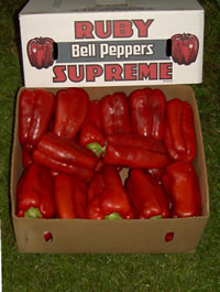 R.A. Rasmussen & Sons Red Bell Peppers